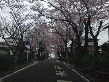 2015.4.6Jsakura