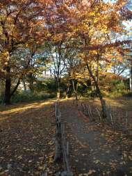 懐古園紅葉まつり3