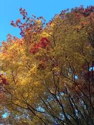 懐古園紅葉まつり7