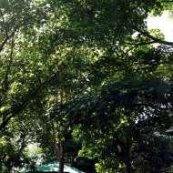 木漏れ日の庭2